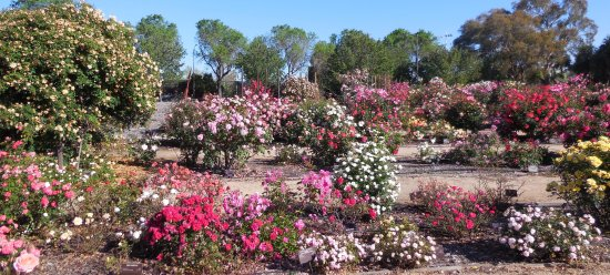 Heritage Rose Garden San Jose 2018 All You Need To Know Before You Go With Photos