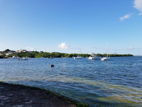 Bio Island Puerto Rico Reviews