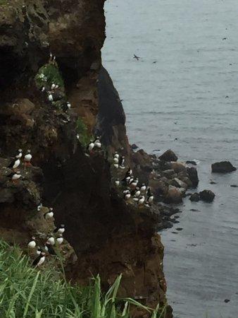 Saudarkrokur, Islandia: Drangey Island