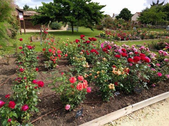 Terre de Rose Distillerie: Kleiner Überblick