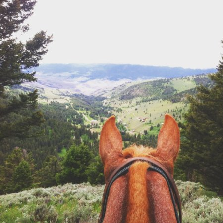 Gardiner, MT: Views are just better between the ears of a horse