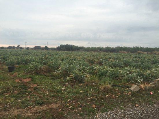 Provincia de Castellón, España: Alcosebre  Castellón