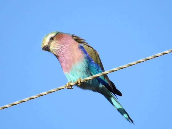 Arathusa Safari Lodge: 1000s of pictures taken, but the birds are my favorites.