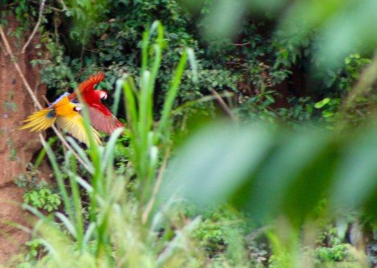 Foto Tambopata Research Center