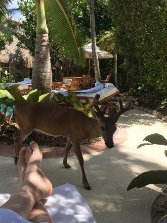 Little Palm Island Resort & Spa, A Noble House Resort: photo0.jpg