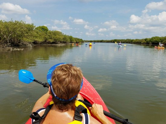 Marine Discovery Center: Group kayaking with a guide to explain the surroundings
