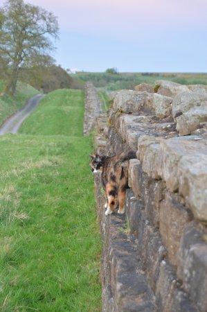 B And B Along Hadrian's Wall Willowford Chicken Guards Hadrian's Wall Access - Foto di Willowford ...
