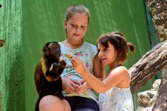 ‪Akumal Monkey Sanctuary and Rescued Animals‬