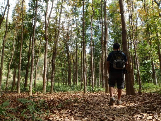 Calabarzon Region, Φιλιππίνες: Walking along the forest part of Wawa