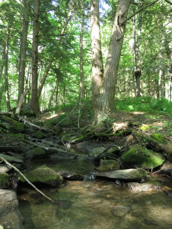 Williamstown, VT: the stream behind our tent