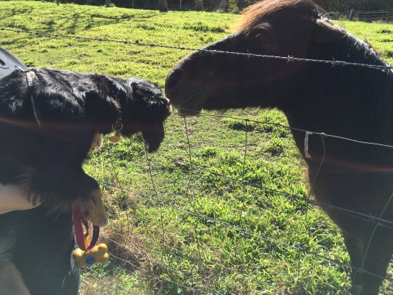 Cooroy, ออสเตรเลีย: Dog meets horse and falls in love