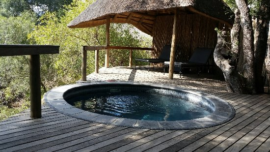 Foto de Londolozi Private Game Reserve