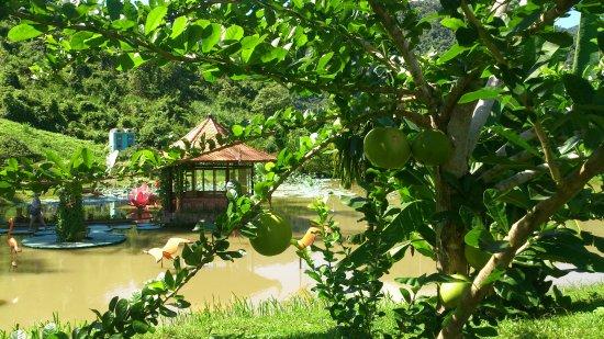 Hoa Lam: на экскурсии Янг Бэй