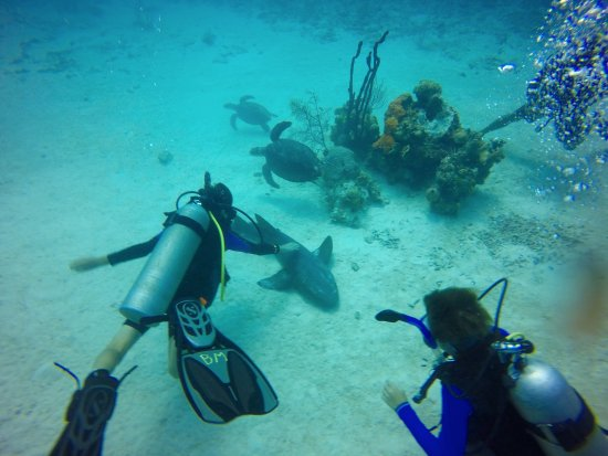 George Town, Grand Cayman : Too cool. Getting to pet a friendly nurse shark and see 3 sea turtles all in one dive!