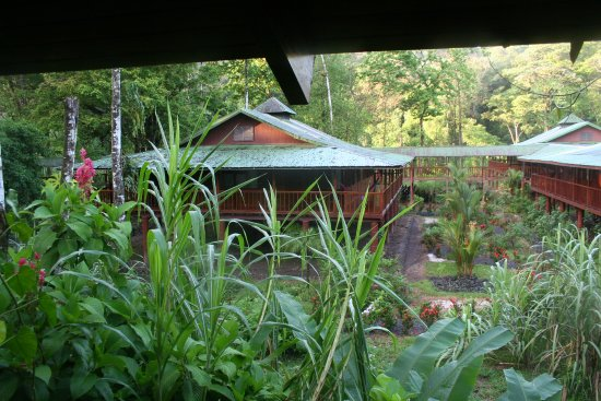 Selva Verde Lodge: Block of 4 rooms with a walkway to the next block