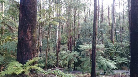 Mount Dandenong, Αυστραλία: View from the Lodge