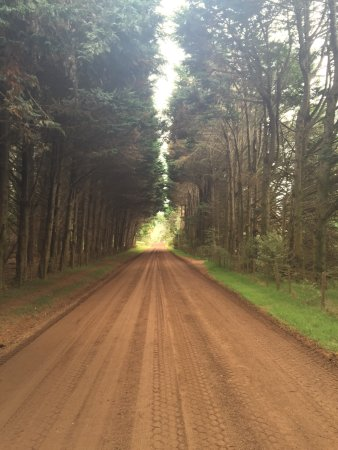Isla Waiheke, Nueva Zelanda: Dirt road to winery, but gorgeous!