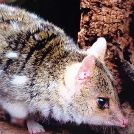 Taranna, Australia: photo1.jpg
