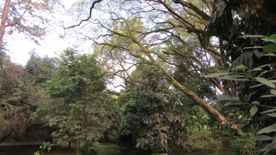 Four Points by Sheraton Arusha, The Arusha Hotel: garden