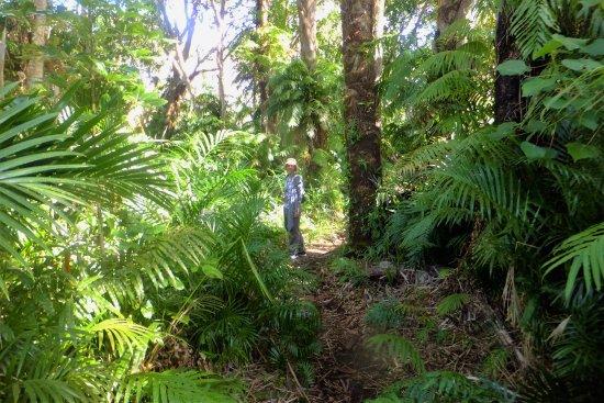 Maputaland Coastal Forest Reserve, África do Sul: Raffia Palm Forest
