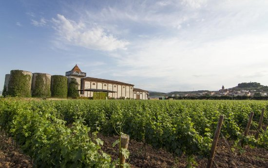 Navarrete, Hiszpania: viñedo
