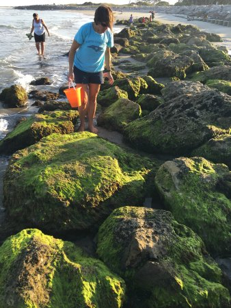 Must Go At Low Tide Picture Of Coquina Outcrop Kure Beach