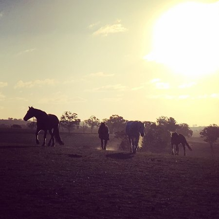 O'Connell, Australien: happy horses