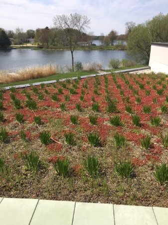 Shawano, WI: Green roof overlooking the river