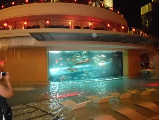 Golden Nugget Hotel: The pool at night