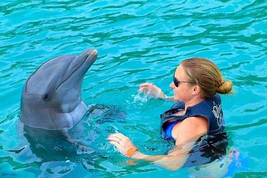 Dolphin Cove: photo0.jpg