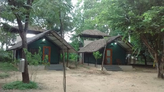 Bannerghatta Nature Camp : Executive TEnts