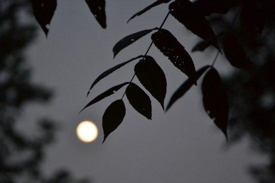 Lena, IL: Moon