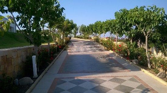 Atrium Prestige Thalasso Spa Resort and Villas: One of the beautiful tree/plant lined walks.