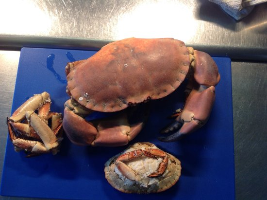 Proper Gander: Giant crab from Aberdovey