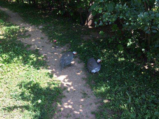 Республика Татарстан, Россия: Страусиная ферма, для животных отличные условия