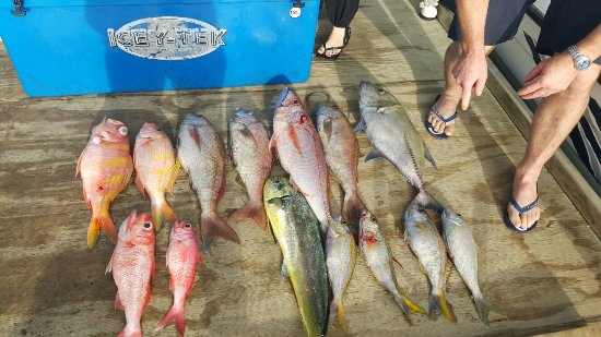 Black Pearl Charters: These professionals try everything to ensure that you have a great day and a feed of fish .