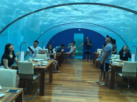 Ithaa undersea restaurant at conrad maldives rangali for Ithaa prices