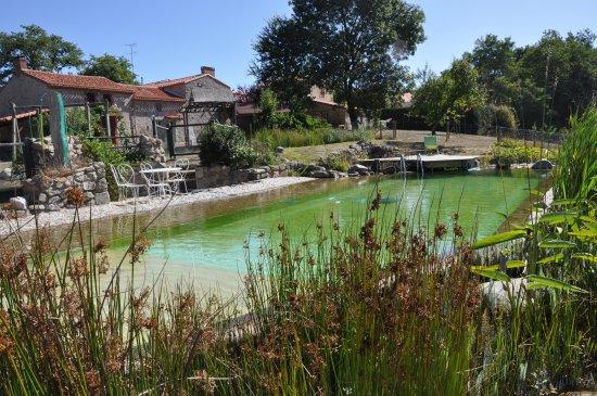 piscine d 39 eau naturelle photo de gite nature vend e tripadvisor. Black Bedroom Furniture Sets. Home Design Ideas