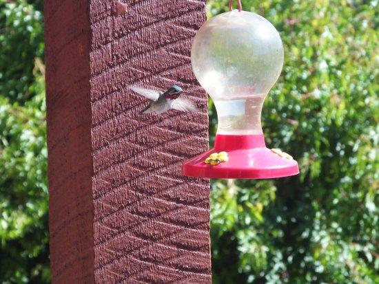 A Vacation Paradise at Quail Ridge B & B: Hummingbirds feed at breakfast