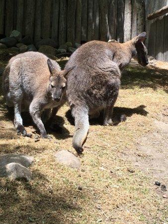 John Ball Zoo: photo1.jpg