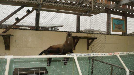 Morro Bay Aquarium: Sea Lion in enclosure