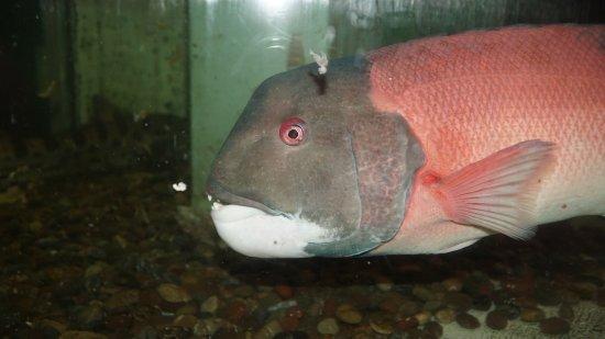 Morro Bay Aquarium: Local Sealife