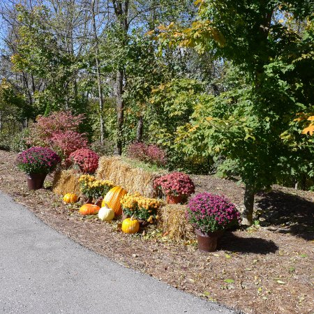 Butterfly Meadows Inn and Farm: Halloween at Butterfly Meadows