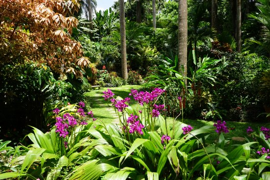 Hunte's Gardens: one of the paths