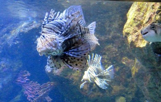 Come near me and I'll stick you - Picture of L'Aquarium de Barcelona