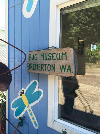 Bremerton Bug Museum: The Bug Museum in Bremerton