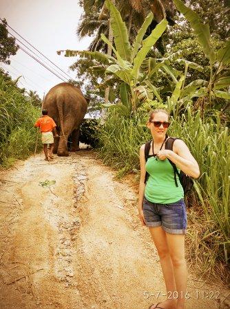 Mawanella, Sri Lanka: Green view elephant walk