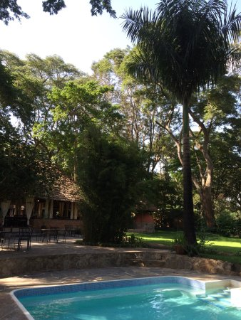 Rivertrees Country Inn: Piscina e giardino del lodge con colobus black and white sugli alberi che mangiavano