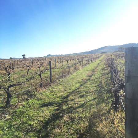 Burnbrae Vineyard and Winery: photo1.jpg