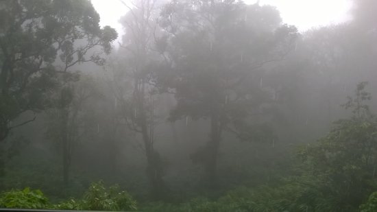 The Tall Trees Munnar: morning view from my room balcony.